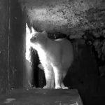 Chat vu à la caméra